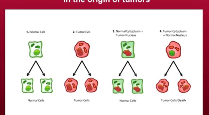 Wenn Neue Erkenntnisse in der Krebsforschung ignoriert werden