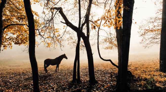 Die Ungereimtheiten einer Pandemie und die Angst vor einer unbequemen Wahrheit – Teil 3: Wie testet man ein totes Pferd? #Covid-19